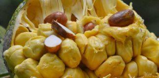 cempedak fruit